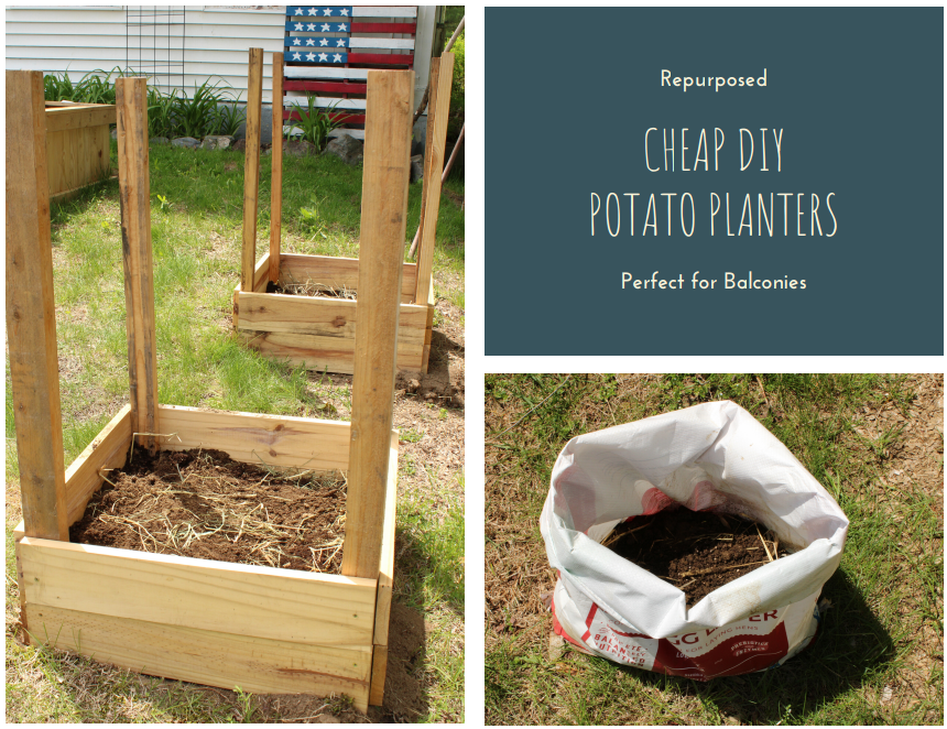 Cheap DIY Potato Planter