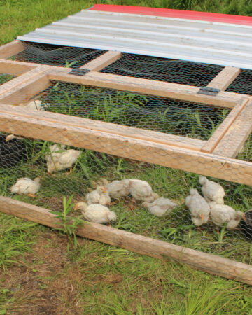Front side of completed DIY Chicken Tractor